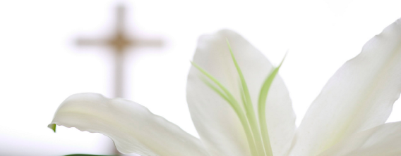 Easter-Lily-Banner.png